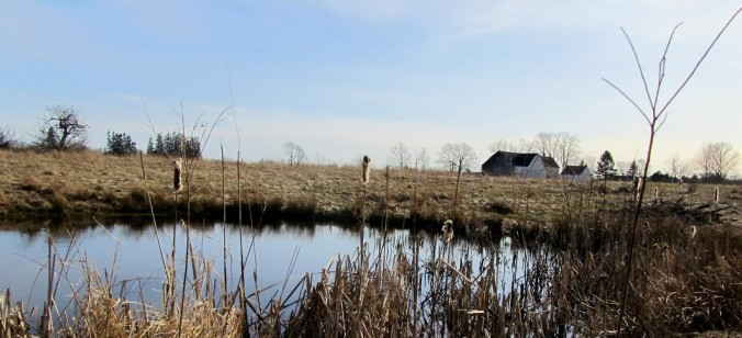 Nova Scotia farm pond in fall (photo: Kate Goodale).
