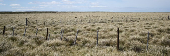 White grass on the Falkland Islands