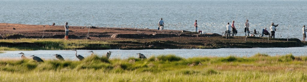 Fishermen and migratory birds compete for space at the Minas basin (photo: Mark Elderkin)