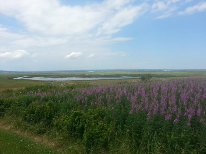 Flooded dykeland at the Chignecto Isthmus from Fort Beausejour