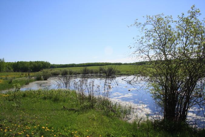Wetland on Steve Kenyons leased land in Alberta, near Busby.